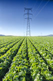 Wysoki woltaż Góruje w polu z sałatami Fotografia Stock