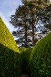 Wysoki zielony labirynt i nawet wysocy drzewa Obraz Royalty Free