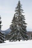 Wysoki zimy drzewo Obrazy Royalty Free