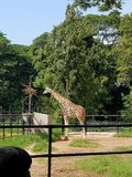 Wysoki zwierzę Zdjęcia Stock