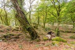 Wysokich g?r drewna w wiosna ranku w parku narodowym Peneda Geres w p??nocy Portugalia zdjęcia stock
