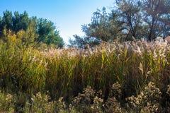 Wysokie «Indycze Nożne «trawy w jesieni w Ouray obywatela rezerwat dzikiej przyrody fotografia royalty free