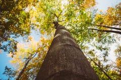 wysokie drzewa Obrazy Stock