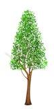 wysokie drzewa Obraz Stock
