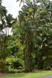 Wysokie paprocie lubią palmy przy Singapur ogródami botanicznymi obrazy stock