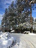 Wysokie sosny wzdłuż śniegu zakrywali drogę z ciężarówką wśród drzew BC Kanada Zdjęcia Royalty Free