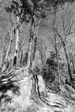 Wysokiego drzewa dorośnięcie na górze skały w pustkowie terenie, czerni a Obraz Royalty Free