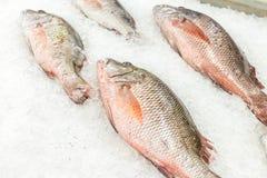 Wysokiego kąta Surowa Świeża ryba Chłodzi na łóżku zimno lód w owoce morza rynku Bali wyspa, Indonezja Zdjęcia Royalty Free