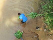 Wysokiego kąta widok Khon Kaen - rolnictwo na Chi - fotografia royalty free
