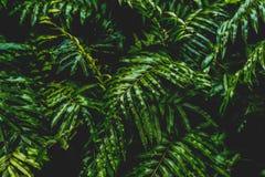Wysokiego kontrasta pojęcia tło i tekstura zielonego koloru paproć opuszczamy krzaka w lesie obraz stock