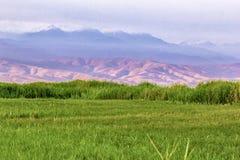 Wysokiej góry łąkowa trawa przeciw tłu halni skłony i szczyty na ciepłym lata ` s dniu zdjęcie royalty free