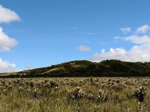 Wysokiej góry paramo i biome neotropical ekosystem Endemiczna różnorodność biologiczna zdjęcia stock