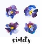 Wysokiej Jakości akwarela ustawiająca Fiołkowy i Błękitny kwiat Pansy, ręka rysujący projektów elementy Fotografia Stock