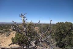 wysokość pustynna Zdjęcia Stock