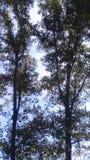 Wysokość w drzewach Zdjęcie Stock