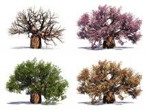 wysokości odosobniony postanowienia drzewo Obraz Stock