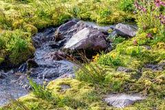 wysokogórska łąka z strumieniami i kamieniami przy górą dżdżystą obrazy stock