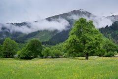 wysokogórska piękna łąka Zdjęcia Royalty Free