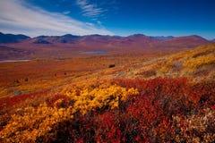wysokogórska tundra Zdjęcia Royalty Free