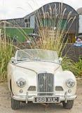 wysokogórski Inverness obywatela wiecu sunbeam biel Obrazy Royalty Free