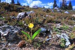 wysokogórskie łąki Wyoming Obraz Stock