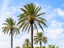 Wysp drzewka palmowe Na niebieskim niebie Zdjęcia Royalty Free