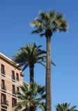 Wysp Kanaryjska Daktylowe palmy w Barcelona, Hiszpania Fotografia Royalty Free