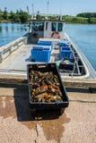 Wyspa homar Fotografia Royalty Free