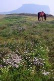wyspa Jeju powulkaniczny zdjęcie stock