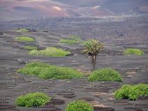 Wyspa Kanaryjska Lanzarote zdjęcie stock