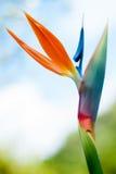 wyspa kanaryjska ptasi raj Tenerife Fotografia Stock