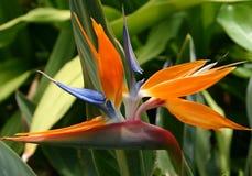 wyspa kanaryjska ptasi raj Tenerife Zdjęcie Royalty Free