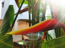 wyspa kanaryjska ptasi raj Tenerife Obraz Royalty Free