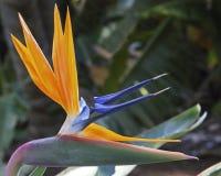 wyspa kanaryjska ptasi raj Tenerife Zdjęcia Royalty Free