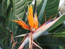 wyspa kanaryjska ptasi raj Tenerife Fotografia Royalty Free