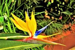 wyspa kanaryjska ptasi raj Tenerife Zdjęcia Stock