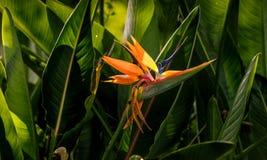 wyspa kanaryjska ptasi raj Tenerife Obrazy Stock