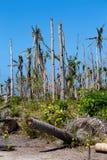 Wyspa Malapascua po tajfunu, Filipiny zdjęcie royalty free
