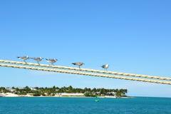 wyspa nad seagulls Zdjęcie Stock