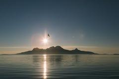 Wyspa, zmierzch i ptak, Fotografia Stock