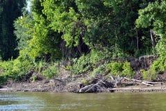 Wyspy Danube 5 Obraz Stock