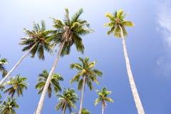 wyspy drzewa kokosowe Zdjęcia Stock