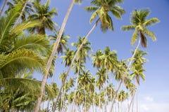 wyspy drzewa kokosowe Fotografia Royalty Free
