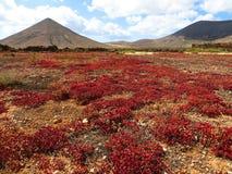 Wyspy Kanaryjska podróży kolory obraz royalty free