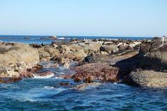 wyspy pieczęć Zdjęcia Royalty Free