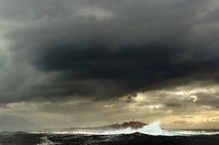 wyspy pieczęć Zdjęcie Royalty Free