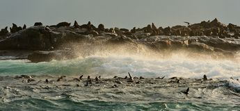 wyspy pieczęć Zdjęcia Stock