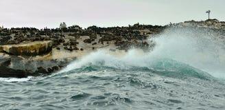 wyspy pieczęć Obraz Stock