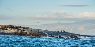 wyspy pieczęć Obraz Royalty Free