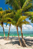 wyspy plażowej raju palm drzewo Floryda Obrazy Royalty Free